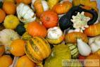 Recept Dýňový kompot s ananasovou příchutí - Tykev obecná, nebo - li Dýně obecná